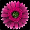 игра FlowerCare